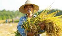 """阿里打造永不落幕的丰收节:""""花式""""创新模式助农"""