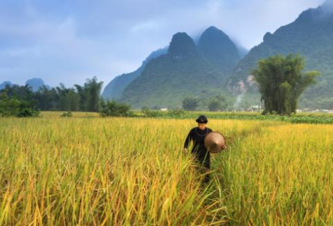 2020年农村创业有什么好项目?